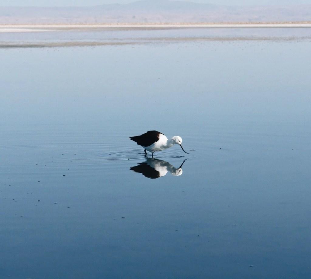 Roteiro Deserto Atacama lagoa Chaxa