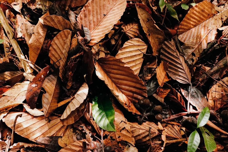 Flores seca cobrem o chão da floresta