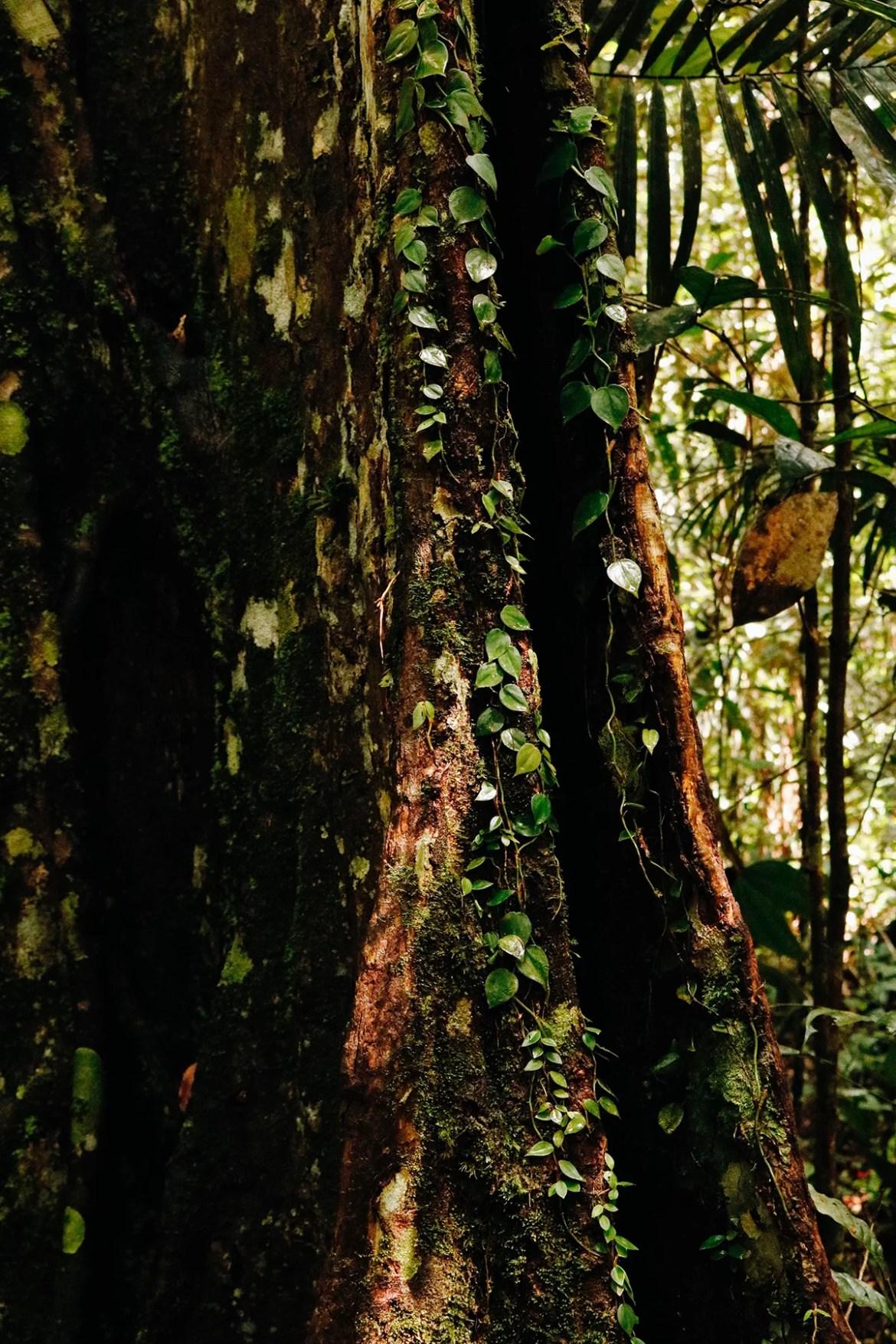 Muito verde e muita vida pela floresta
