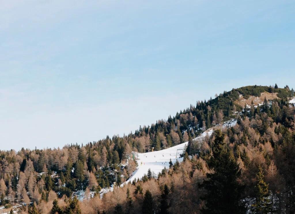 Pista de ski em meio ao bosque