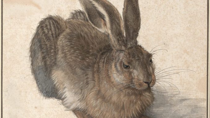 Albrecht Dürer Ausstellung, Feldhase, Meisterwerke der Albertina, Art On Screen - News - [AOS] Magazine