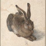 Albrecht Dürer Ausstellung, Feldhase, Meisterwerke der Albertina, Art On Screen - News - [AOS] Magazine