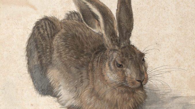 Albrecht Dürers Feldhase, Albrecht Dürer, Feldhase, Zeichnungen von Dürer, Meisterwerke