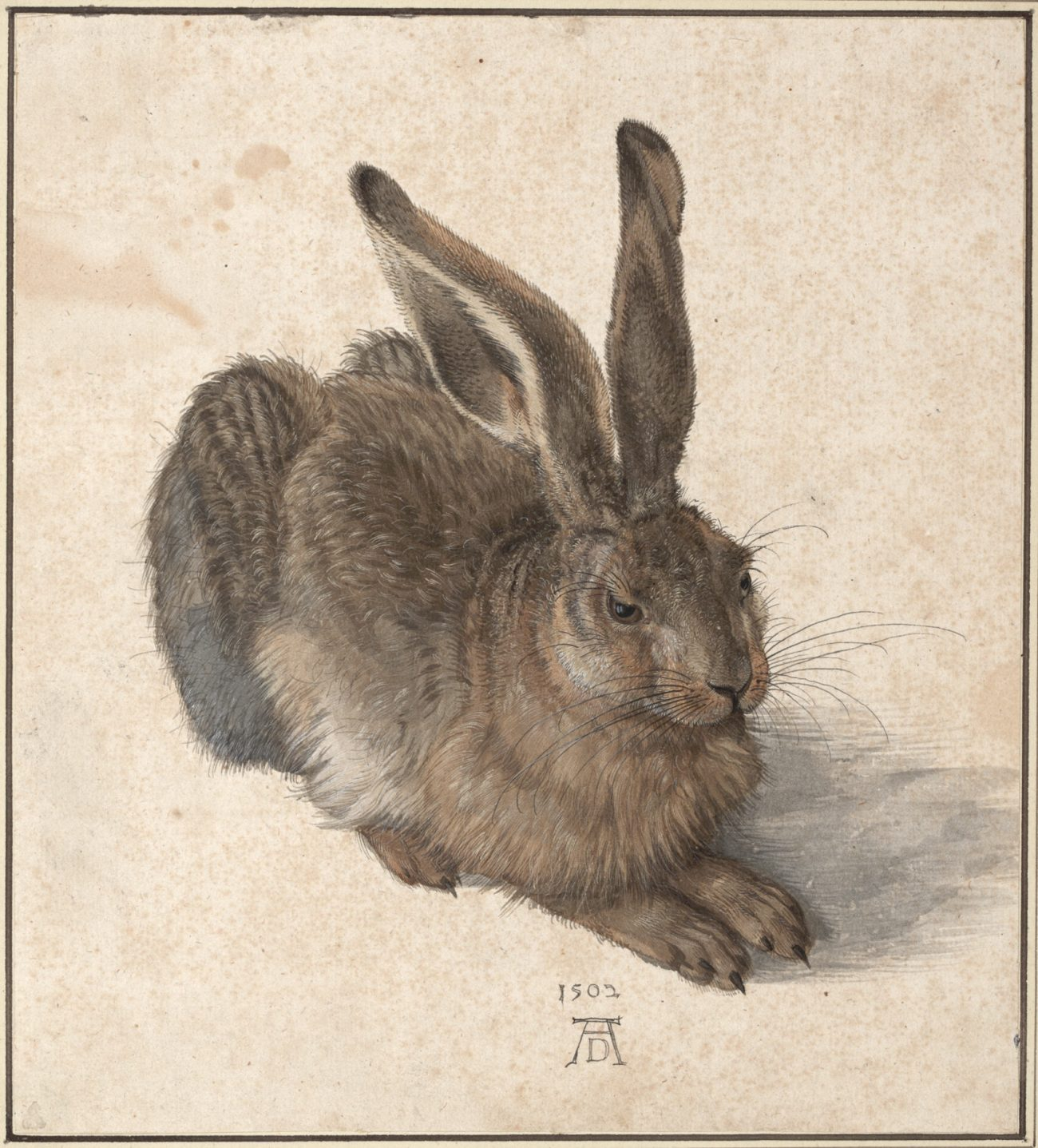 Albrecht Dürers Feldhase, Albrecht Dürer, Feldhase, Zeichnungen von Albrecht Dürer, Meisterwerke