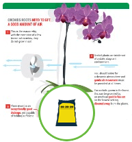 Orchid Care
