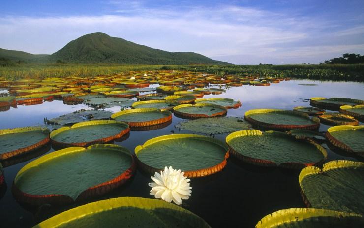 onde-ir-em-abril-01-pantanal Onde ir em Abril? | Série 30 lugares em 30 dias