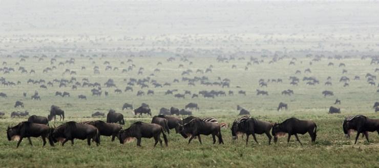 onde ir em junho - dia 25 - tanzania