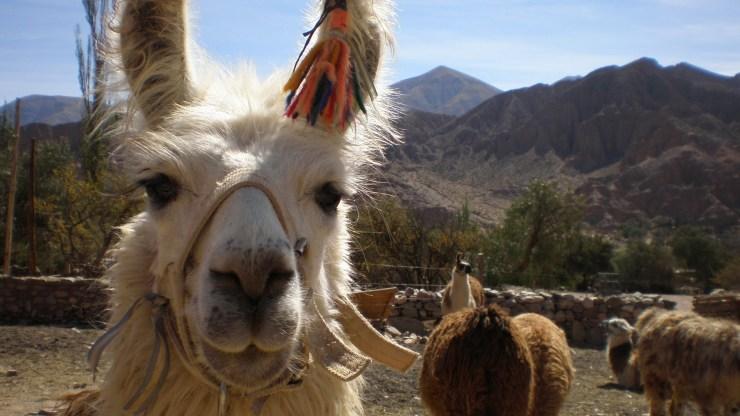 15 melhores lugares para viajar esse ano 2018 bolivia 2