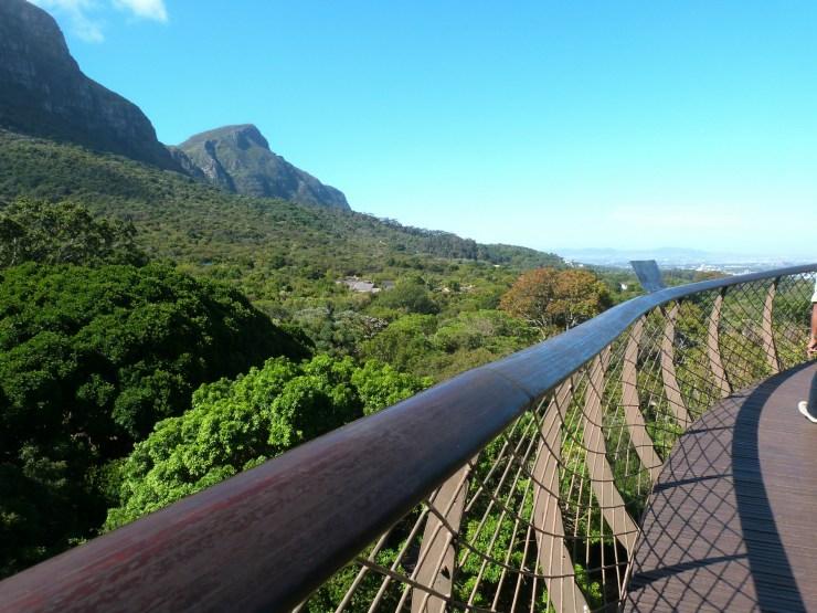Roteiro-Cidade-do-Cabo-4-a-7-dias-tree-canopy-way Roteiro Cidade do Cabo 4 a 7 dias (Sensacional)!