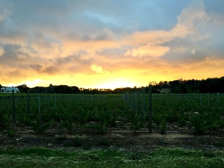 Rota-dos-vinhos-em-Cape-Town-Stellenbosch-e-Franschhoek-3 Rota dos vinhos em Cape Town Stellenbosch e Franschhoek