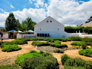 Rota dos vinhos em Cape Town Stellenbosch e Franschhoek babel