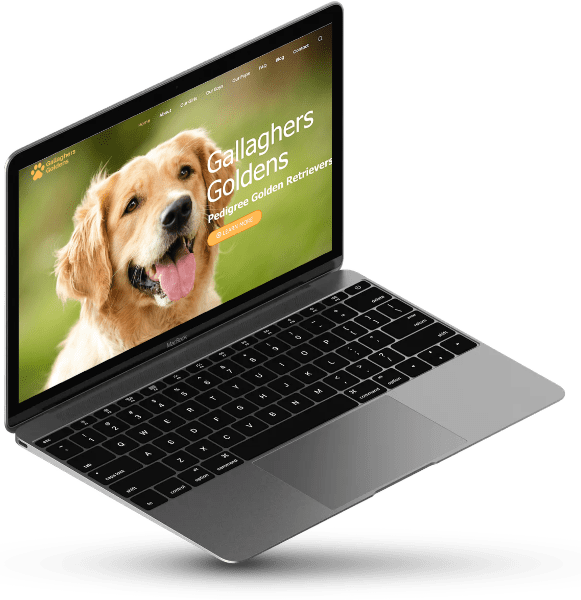 Gallaghers Goldens in a laptop screen