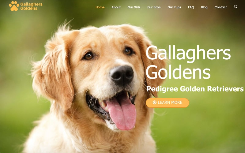 Gallaghers Goldens homepage
