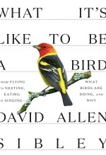 David Allen Sibley, What It's Like To Be a Bird