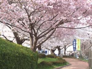 坂戸泉町桜堤3