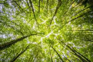 worms eyeview of green trees