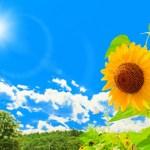 暑中見舞い残暑見舞い例文 先生への書き方で小学生の文例紹介!