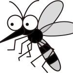 蚊は網戸すり抜けてくぐることがあるの?網戸を楽々通過できる虫は?