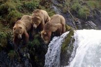 Kenai Alaskan Grizzly Fishing Travel Adventures