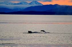 Travel Adventures with Whales in ALaska