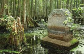 Cypress Swamp in Illinois providing Summertime Adventure Travel Destination ideas for families