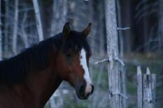 The equestrian center is a family friendly thing to do in whitefish montana that costs nothing.