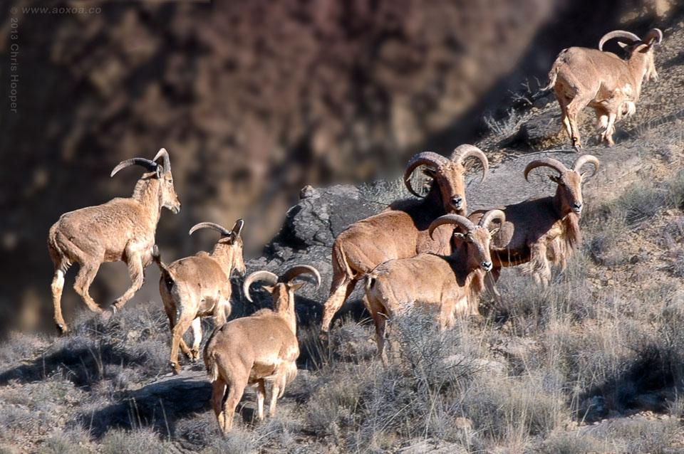 Palo Duro Canyon TX  A Landscape Photography Portfolio  AoxoA