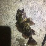 釣り部8 焼津新港3連荘ライトゲームの結果は・・・