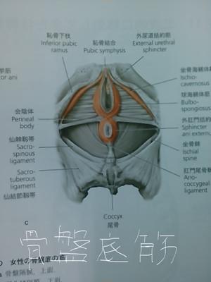 尾てい骨骨折チャクラに影響Q&A | あおぞら整骨院