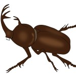 カブトムシの寿命が野生と飼育で違う3つの理由