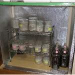 自作温室の菌糸ビンの様子