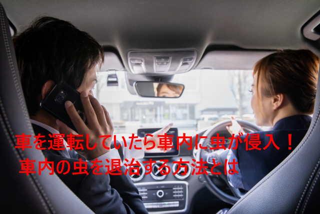 車を運転していたら車内に虫が侵入! 車内の虫を退治する方法とは