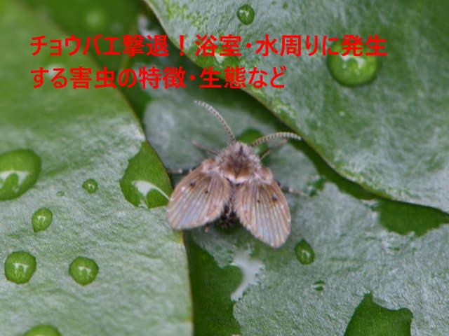 チョウバエ撃退!浴室・水周りに発生する害虫の特徴・生態など