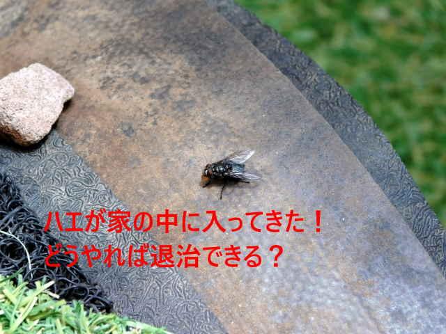 ハエが家の中に入ってきた!どうやれば退治できる?