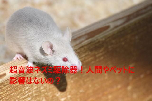 超音波ネズミ駆除器!人間やペットに影響はないの?