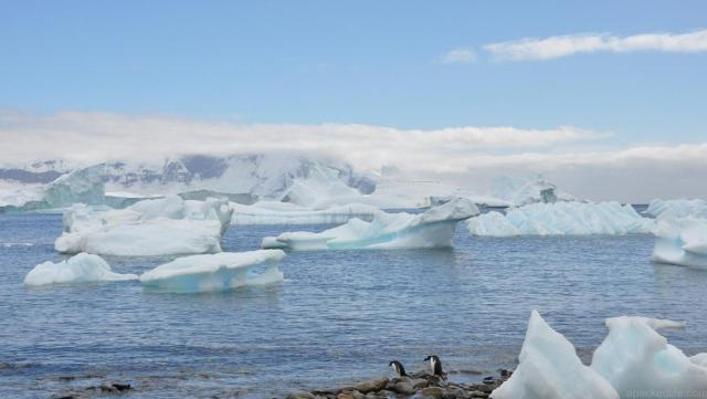 Travel Sisters Antarctica Expedition Cruise Icebergs and Penguins - Best Boat Trips - apackedlife.com