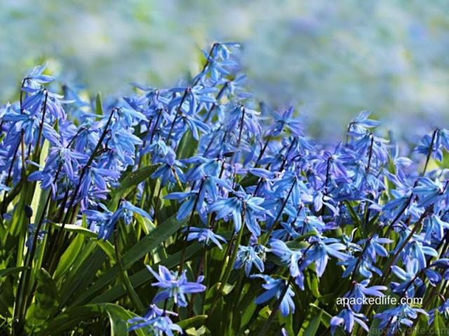 Bluebell time at Hay Wood