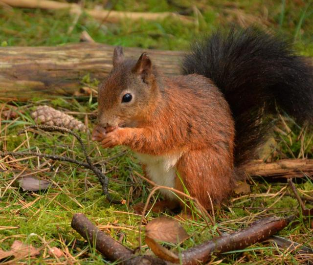 The 11 Best Beaches In England You Must Visit - Formby, Lancashire - Red Squirrel Reserve