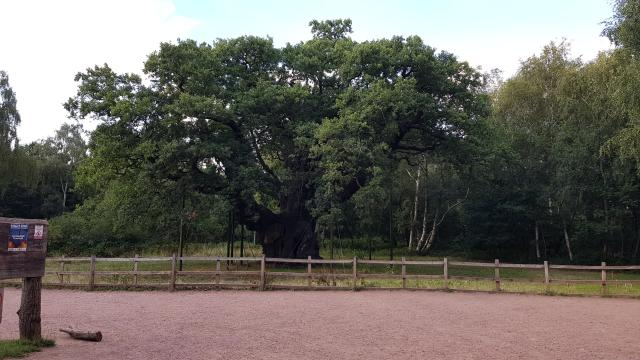 Cool or Unusual things to do in England - Robin Hood's Sherwood Forest, Nottinghamshire