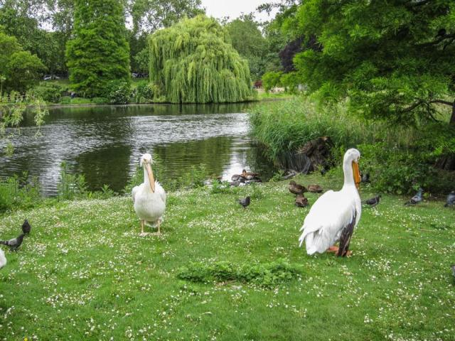 Arzo Travels_ best things to do in London, English Essentials - Cool and Unusual Things To Do In England: St James's Park