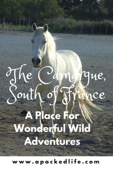 13 Wonderful Adventures In The Wild Camargue