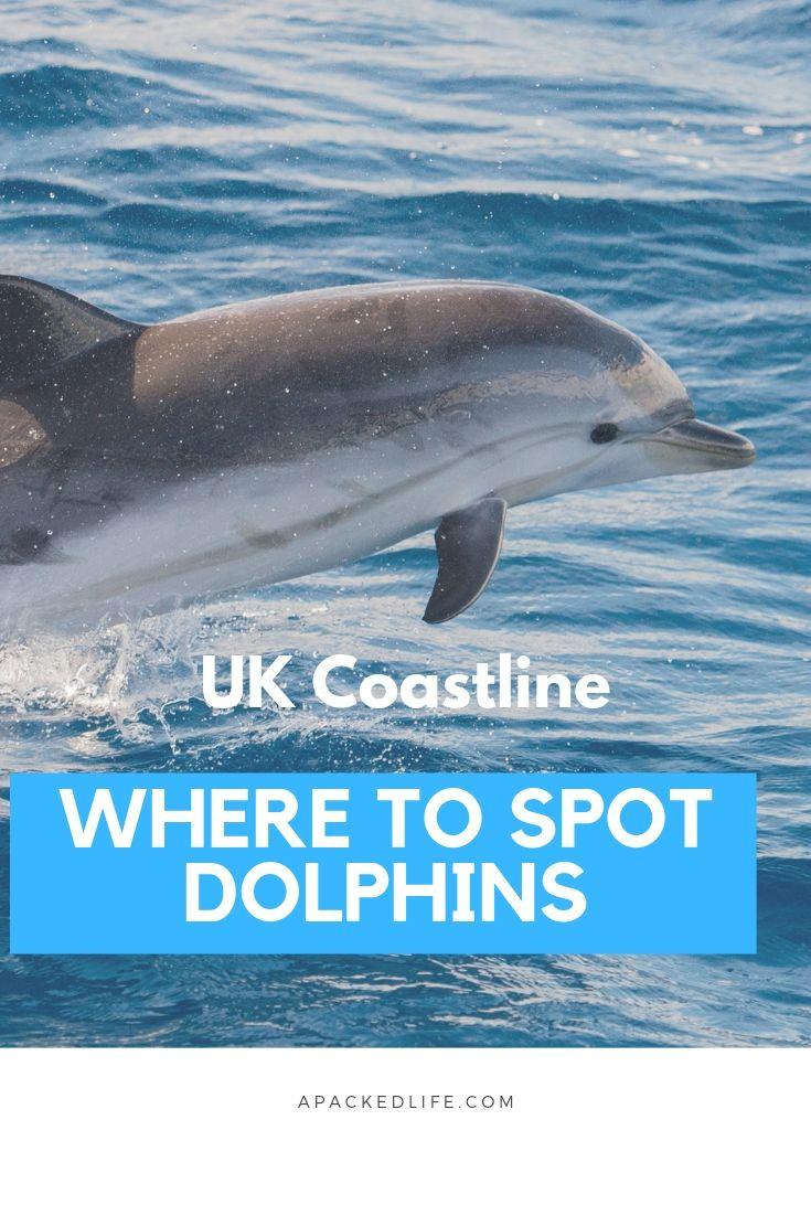f452aeee Where To Spot Dolphins In The UK - a packed life