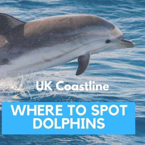 Where to spot dolphins in the UK