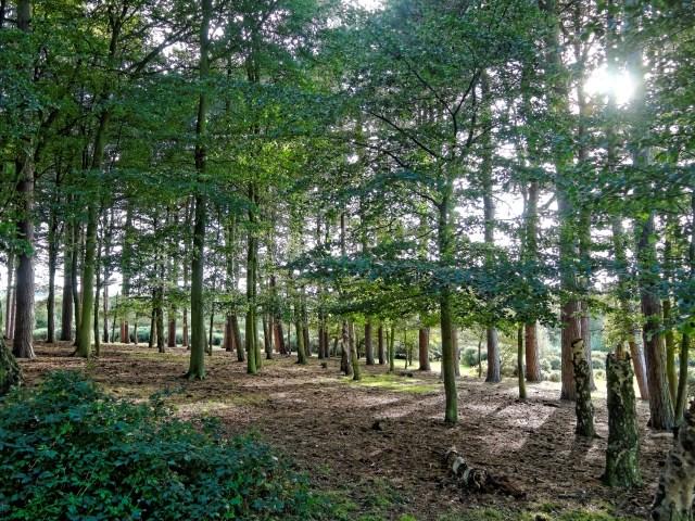 Sutton Park, Birmingham, UK