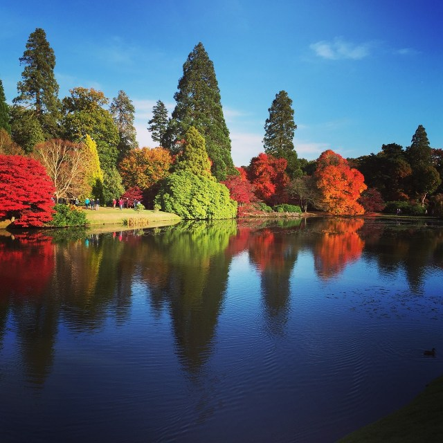 Sheffield Park in Autumn - Happy Days