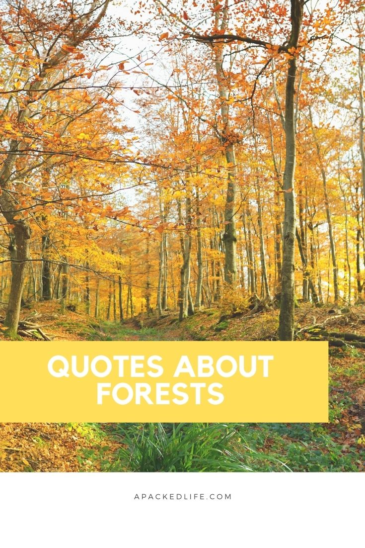 Quotes About Forests, Woodlands and Trees