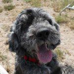 Foto de un perro mayor