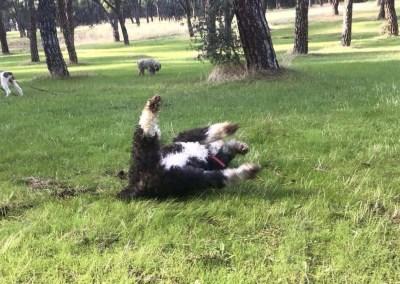 Ref: AP184 – Noa, yuhuuuuu que fresquera está la hierba.