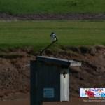 Bird On Bird House 1
