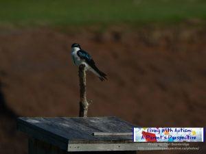Bird On Bird House 2